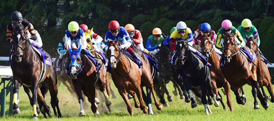 Caballos Preakness Stakes